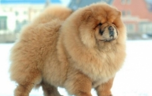10 Dangerous Dog Breeds Most Likely to Turn on Their Owners