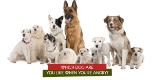 Which Dog are you like when you're angry?