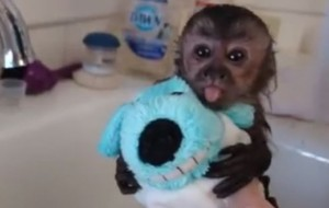 10 Baby Animals Bathing That Will Make You Say